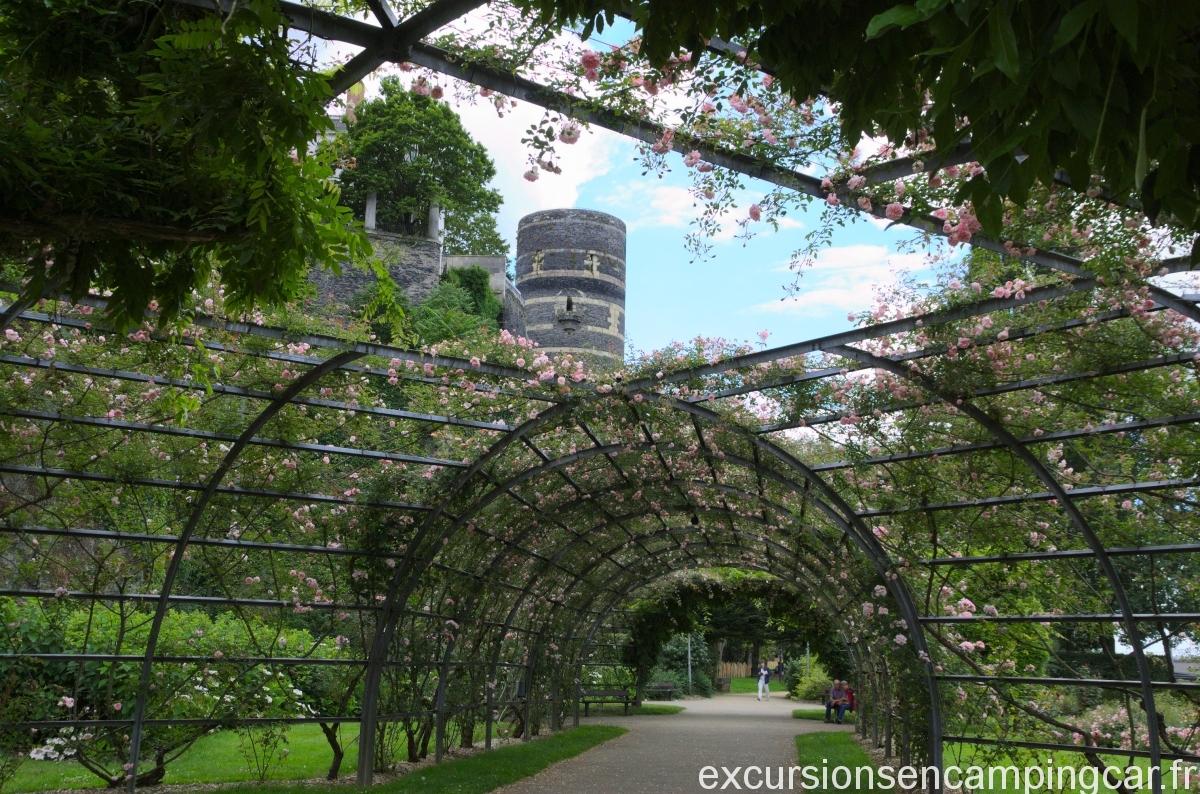Tunnel de roses au pied du château d'Angers